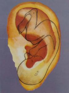 auriculopuntura-oreja-bebe